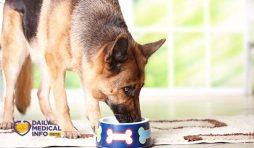 تغذية كلاب الجيرمن