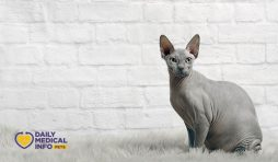 القط الفرعوني