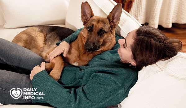 تربية الكلاب الجيرمن