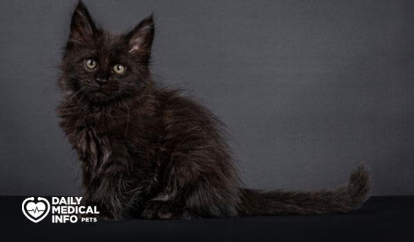 قط ماين كون ذو اللون الواحد solid
