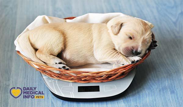 كم وزن الكلب