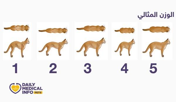 مؤشر حالة الجسم العامة للقطط من 1 لـ 5