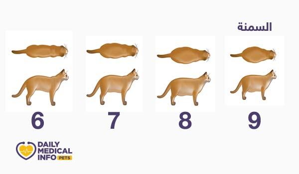 مؤشر حالة الجسم العامة للقطط من 6 لـ 9