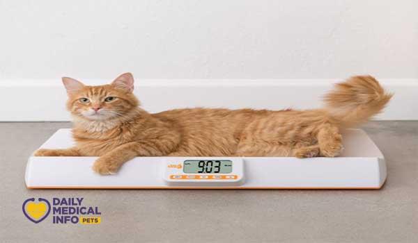 وزن القطط