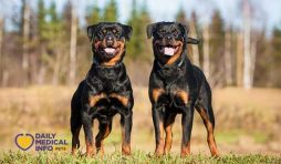 انواع الكلاب الروت وايلر