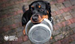 طعام كلاب الروت وايلر