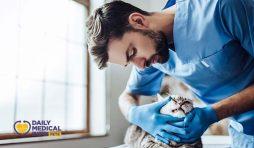قوباء القطط