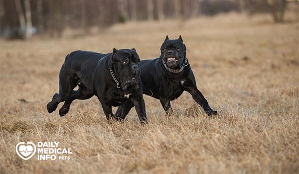 أساسيات تدريب كلاب كين كورسو