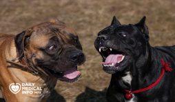 أنواع الكلاب الكين كورسو